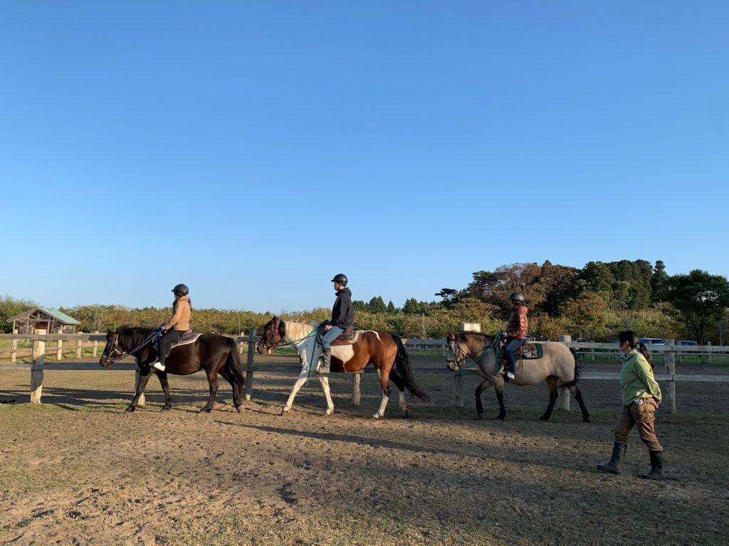 horse_training
